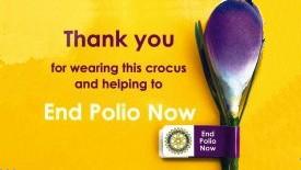 1611_polio